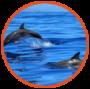 dauphins-90x89